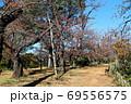 紅葉の洗足池 桜広場 東京都大田区 69556575