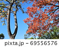紅葉の洗足池 東京都大田区 69556576