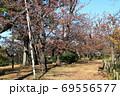 紅葉の洗足池 桜広場 東京都大田区 69556577