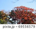 紅葉の洗足池 東京都大田区  69556579