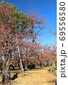 紅葉の洗足池 桜広場 東京都大田区 縦位置 69556580