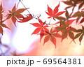 もみじ 69564381