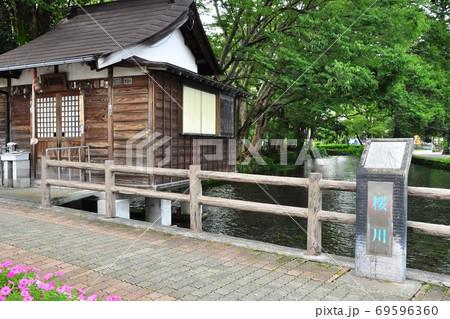 静岡県三島市 桜川と白瀧観音堂と白滝公園 69596360