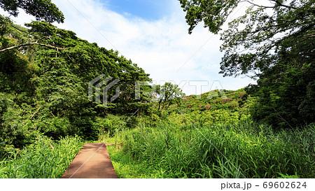 首都圏の貴重な自然の残る湘南三浦半島小網代の森の夏 69602624