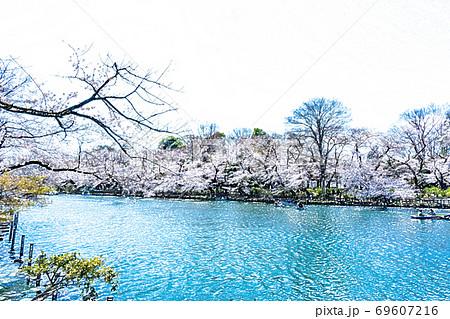 満開の桜と池のボート【色鉛筆】 69607216