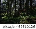 天宮神社境内内、日の差す薄暗い参道と森の木々 69610126