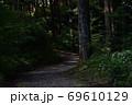 天宮神社境内内、日の差す薄暗い参道と森の木々 69610129