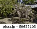 夢殿と桜 法隆寺 奈良 69622103