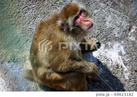 霊長類・ニホンザル~「日立かみね動物園」の動物大集合 69623182