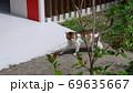 猫 一匹 69635667