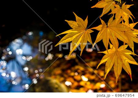 池の水面に輝く美しく色づいた黄葉 69647954