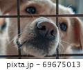 Portrait of sad dog in shelter waiting to be rescued and adopted to new home. Shelter for animals concept 69675013