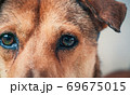 Portrait of sad dog in shelter waiting to be rescued and adopted to new home. Shelter for animals concept 69675015