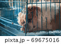 Cute puppies in a cage at an animal shelter. Dog shelter. 69675016