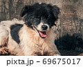 Sad dog in shelter waiting to be rescued and adopted to new home. Shelter for animals concept 69675017