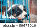 Cute puppies in a cage at an animal shelter. Dog shelter. 69675019