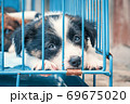 Cute puppies in a cage at an animal shelter. Dog shelter. 69675020