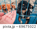 Close-up of male hand petting caged puppy in pet shelter. People, Animals, Volunteering And Helping Concept. 69675022