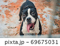 Portrait of mixed breed dog in shelter waiting to be rescued and adopted to new home. Shelter for animals concept 69675031