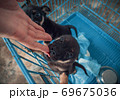 Close-up of male hand petting caged puppy in pet shelter. People, Animals, Volunteering And Helping Concept. 69675036