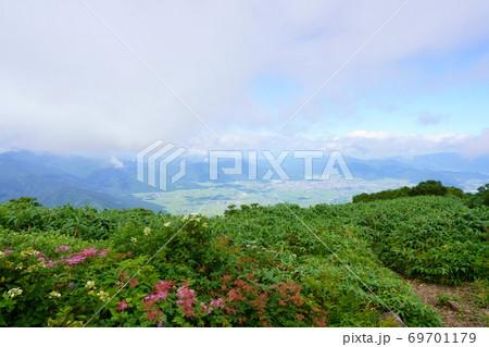 アジサイやシモツケソウが咲く荒島岳山頂から見た大野市街 69701179