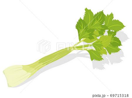 野菜_ セロリ 69715318