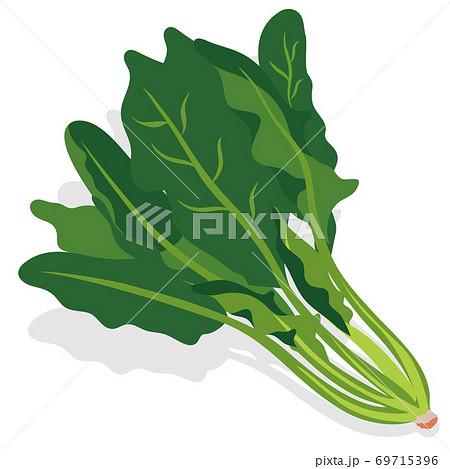 野菜_ ほうれん草 69715396