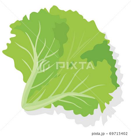 野菜_ グリーンリーフレタス 69715402