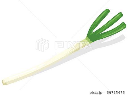 野菜_白ネギ/長ネギ 69715476