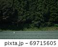 夏のネギ畑 69715605