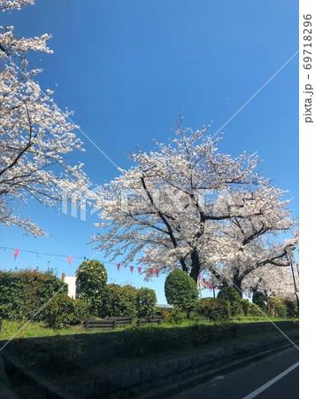 隅田川周辺の桜 69718296