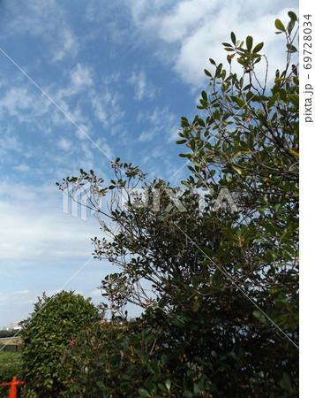 秋の谷津干潟の青空と白い雲 69728034