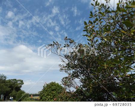 秋の谷津干潟の青空と白い雲 69728035