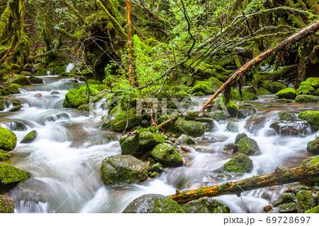 梅雨の美しい苔に映える渓流(6月)屋久島白谷雲水峡 69728697