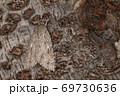 生き物 昆虫 シロシタケンモン、大きめですが地味な姿。背中にうっすら茶褐色の毛束と翅の白点 69730636
