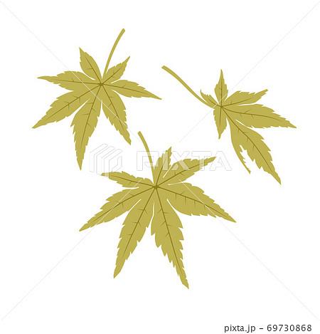 もみじの葉(緑) 69730868