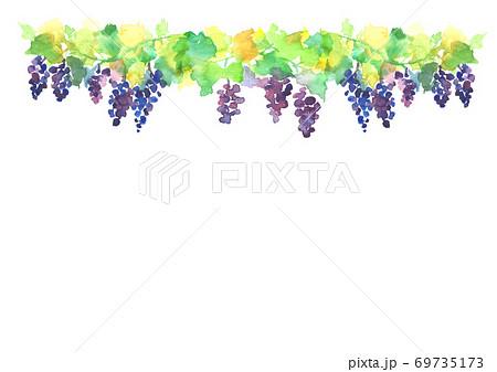 水彩で描いたブドウ畑のイラスト 69735173