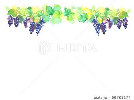 水彩で描いたブドウ畑のイラスト 69735174