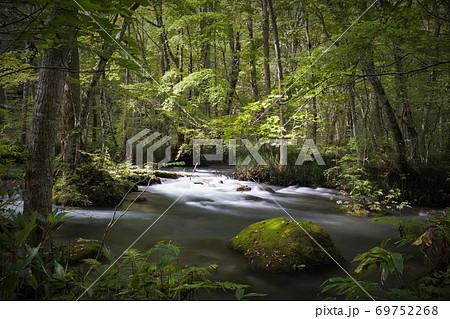 奥入瀬渓流 木漏れ日の渓流 三乱の流れ 69752268
