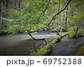 奥入瀬渓流 渓流に横たわる倒木 三乱の流れ 69752388