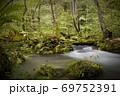 奥入瀬渓流 木漏れ日の中の渓流  三乱の流れ 69752391