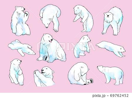 白くま シロクマ Polar Bear 69762452