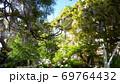 白い家に絡みつく美しい藤 69764432