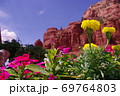 【アメリカ】セドナのレッドロックと鮮やかな花 69764803
