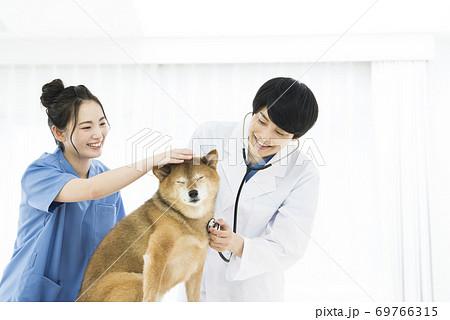 獣医 診療 聴診器 69766315