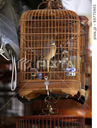香港の鳥好きが集まる園圃街のバードガーデンで鳴き声を自慢するのが名物。これはメジロ(目白) 69770903
