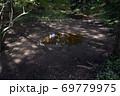 天宮神社境内、森の中のクチナシの池 69779975