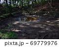 天宮神社境内、森の中のクチナシの池 69779976
