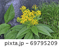 キオン(北海道・知床) 69795209