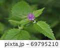 カワミドリ(北海道・知床) 69795210